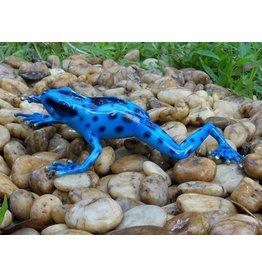 Eliassen Bronze sculpture rainforest frog blue