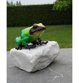 Eliassen Bronzefrosch auf einem Steingrün