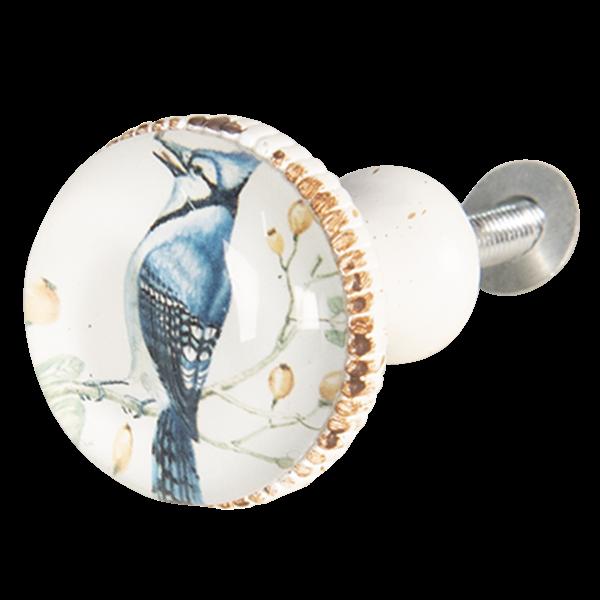 Kastknop Vogel Blauwe Gaai