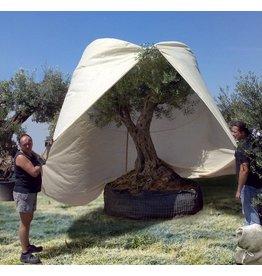 Beschermhoes XXL - voor mediterrane planten  200x300cm