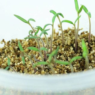 Makkelijke Moestuin Voorzaaivermiculiet