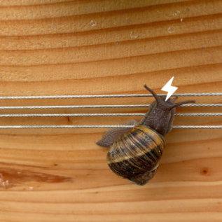 Makkelijke Moestuin Dissuasion des escargots
