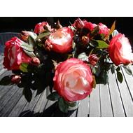 Tantau® Rosa Nostalgie®