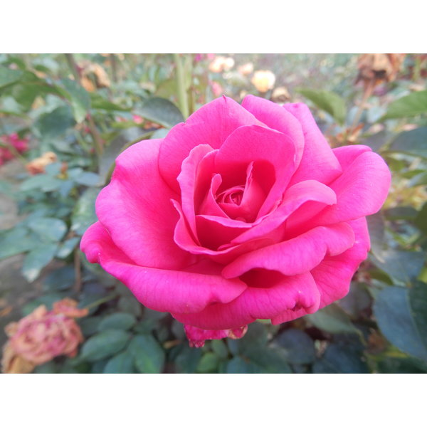 Rosa Criterion