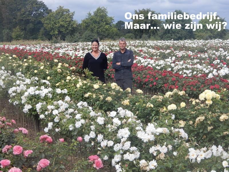 Rosen Kaufen | Rosen ab € 3,75