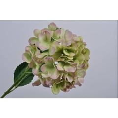 Silk-ka Hortensia tak groen / roze 79 cm