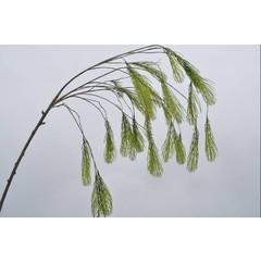 Silk-ka Dennentak pinus groen 131 cm
