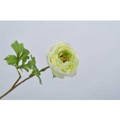 Silk-ka Ranunculus stalk green 58 cm
