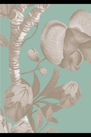 Kit Miles Biophillie | Menthe poivrée