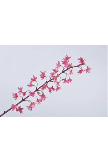 Silk-ka Tige de fleur beauté 79 cm