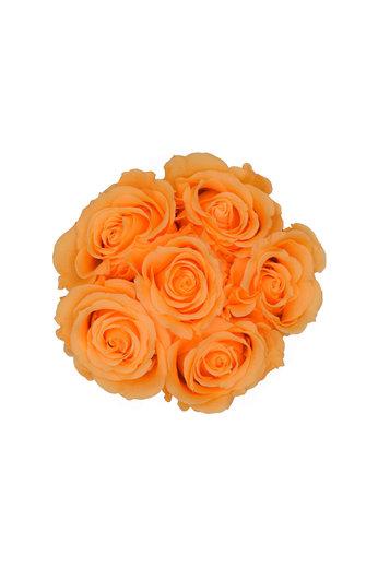 Mini - Roses Éternel Pêche - Boîte Blanche