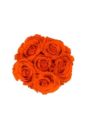 Mini - Orange Endless Roses - White Box