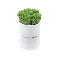 Mini - Roses Éternel Vert - Boîte Blanche