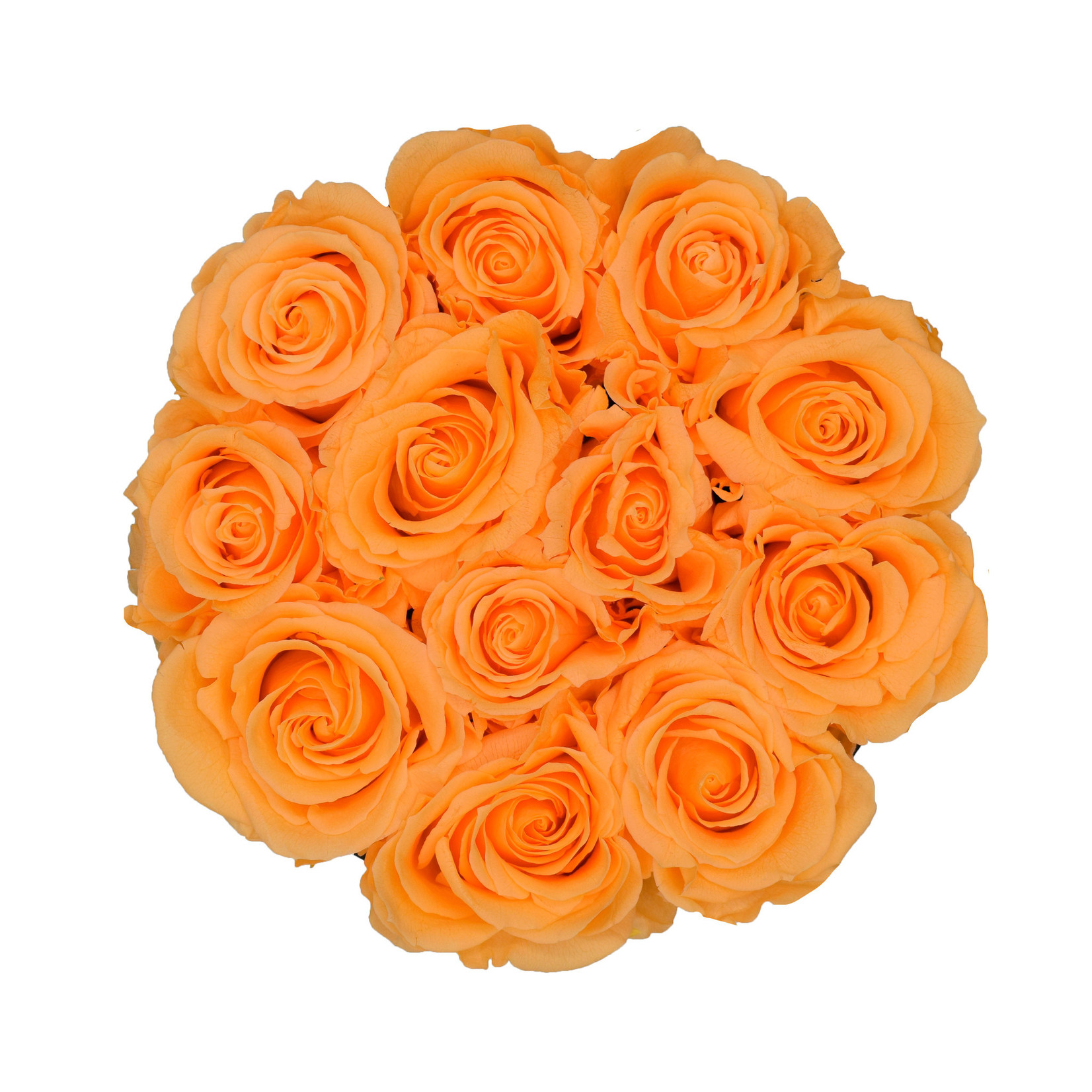 Small - Peach Endless Roses - White Box