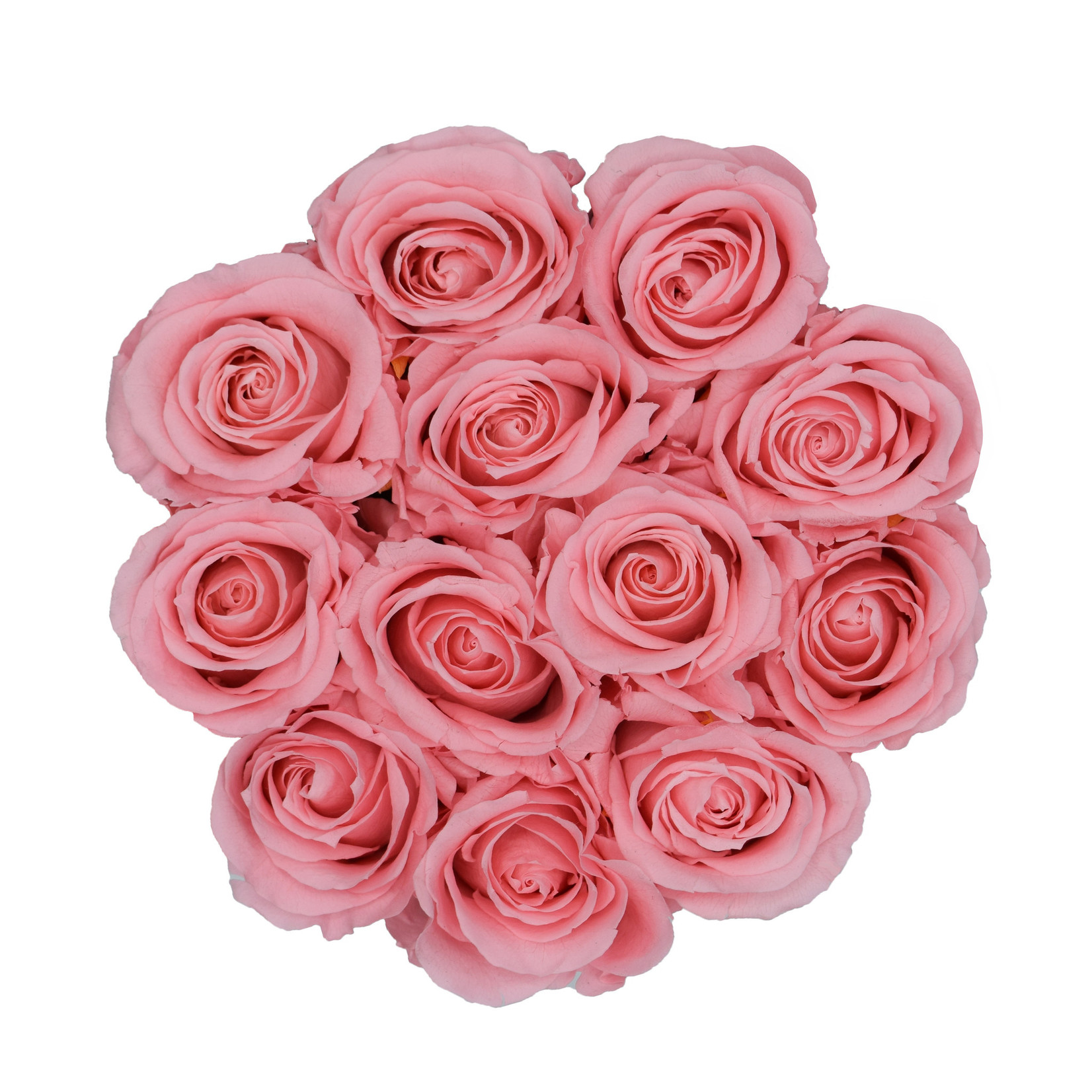 Small - Pink Endless Roses - White Box