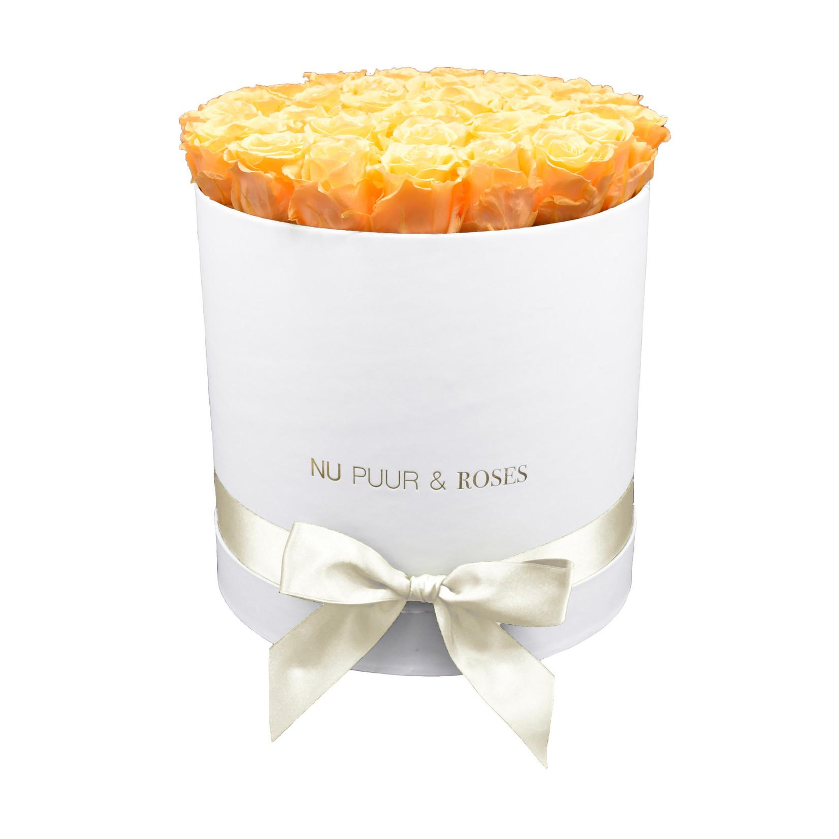 Large - Peach Endless Roses - White Box