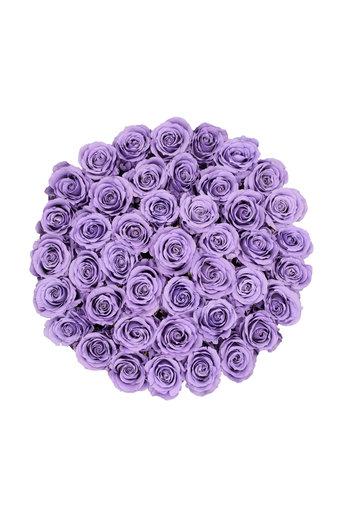 Extra Large - Roses Éternel Lilas - Boîte Blanche