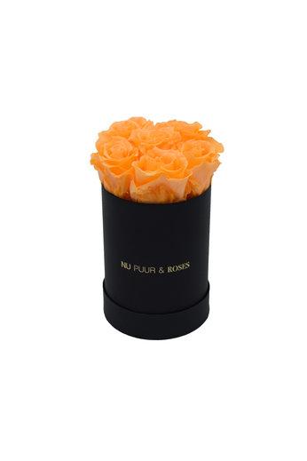 Mini - Roses Éternel Pêche - Boîte Noire