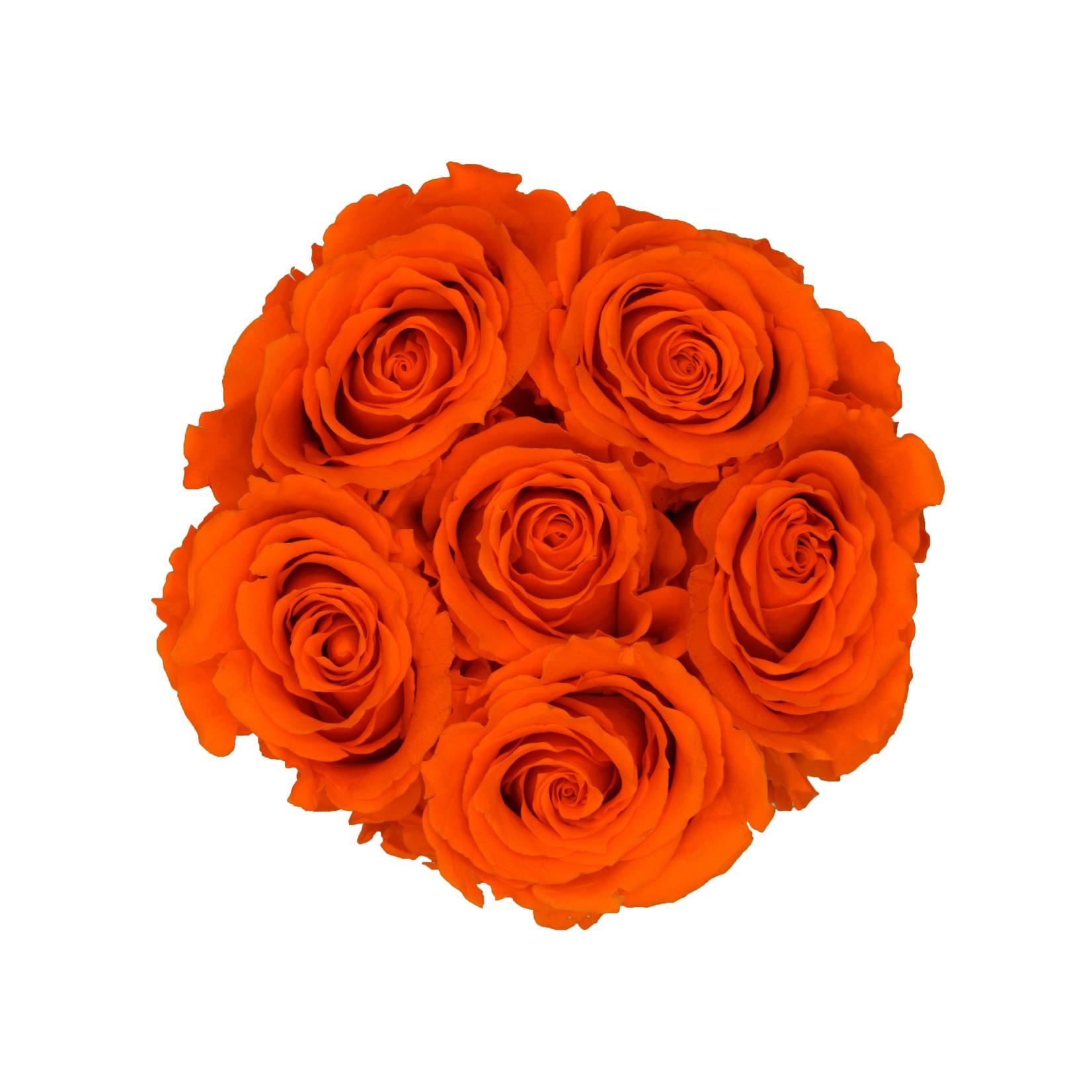 Mini - Roses Éternel Orange - Boîte Noire