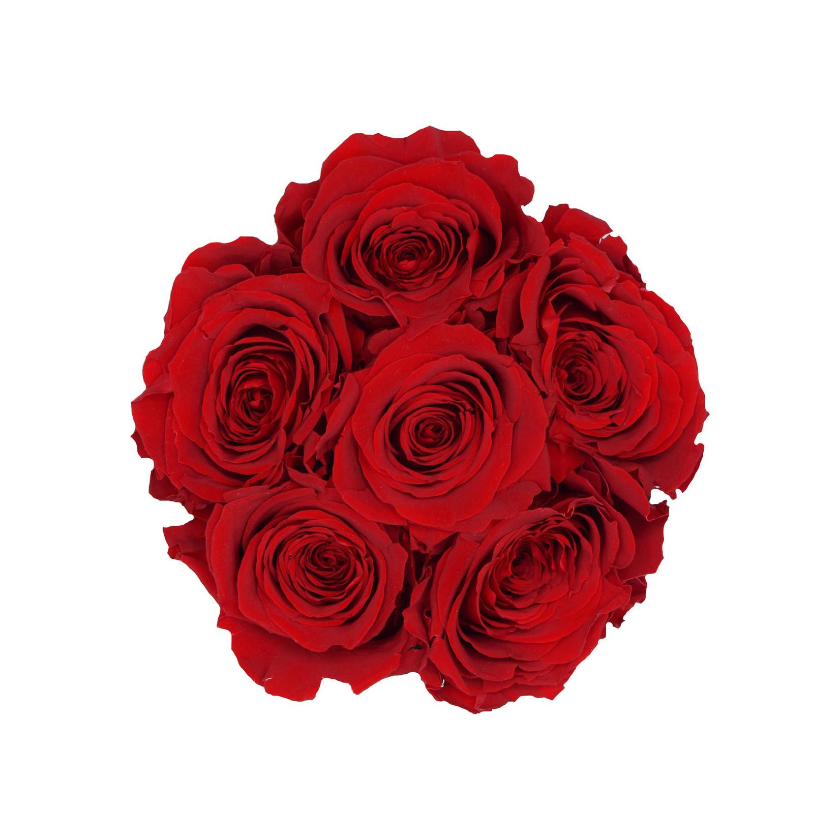 Mini - Roses Éternel Rouge - Boîte Noire