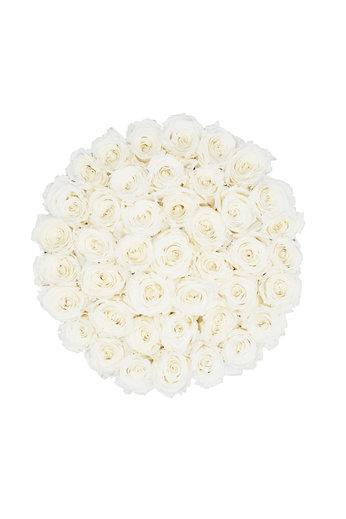 Extra Large - Roses Éternel Blanches - Boîte Noire