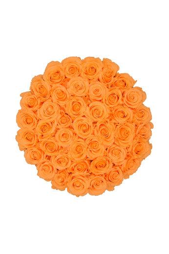 Extra Large - Roses Éternel Pêche - Boîte Noire
