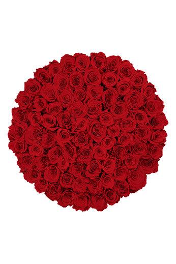 Maxi - Red Endless Roses - Black Box
