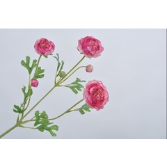 Silk-ka Ranunculus branch pink 66 cm