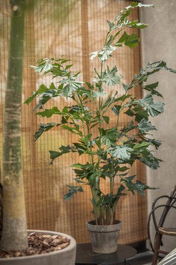 Silk-ka Plant Palm Green | 190 cm