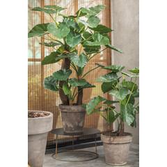 Silk-ka Plant Alocasia Groen | 120 cm