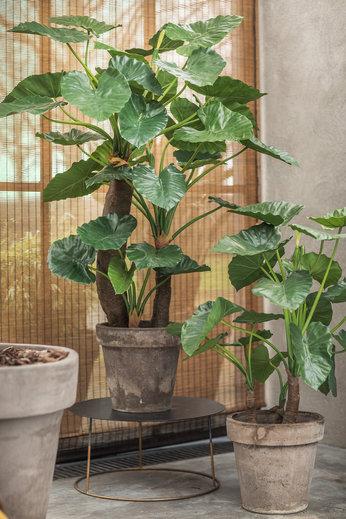 Silk-ka Plant Alocasia Green   120 cm