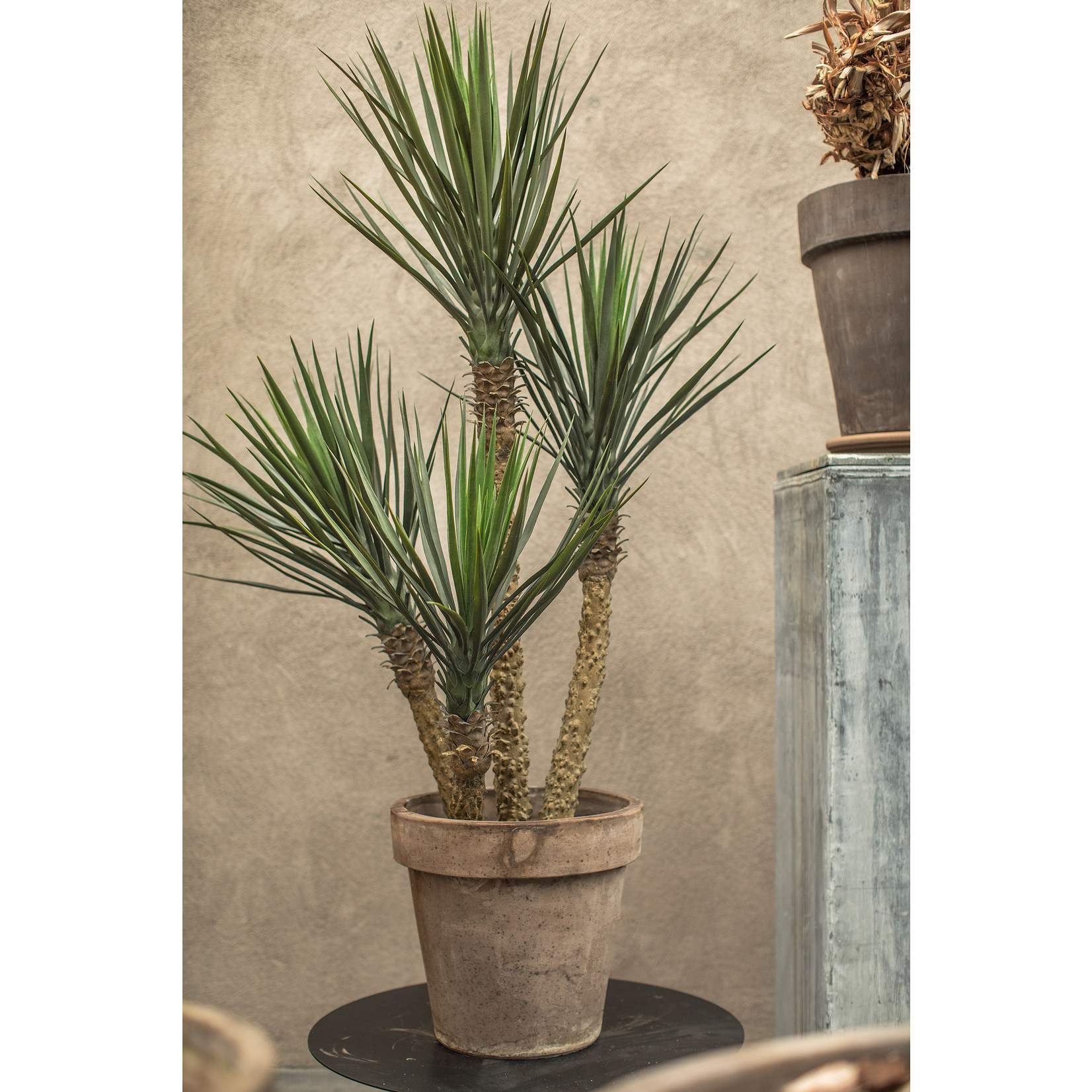 Silk-ka Plant Yucca Green | 155 cm