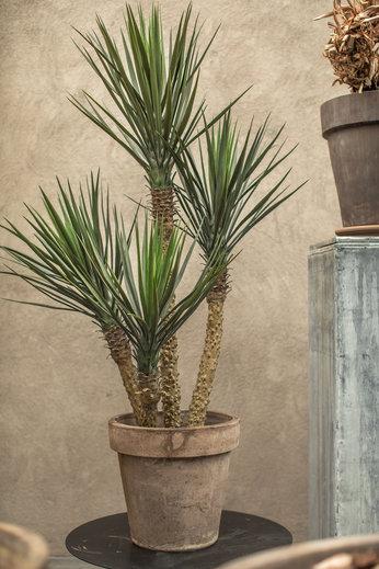 Silk-ka Plant Yucca Groen | 155 cm