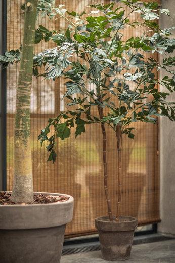 Silk-ka Plantez le vert de palmier | 240 cm