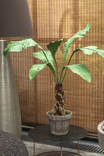 Silk-ka Plant Groen   140 cm