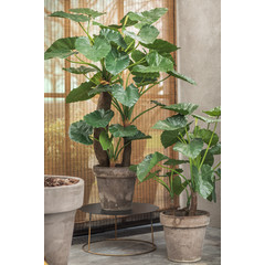Silk-ka Plant Alocasia Green | 170 cm
