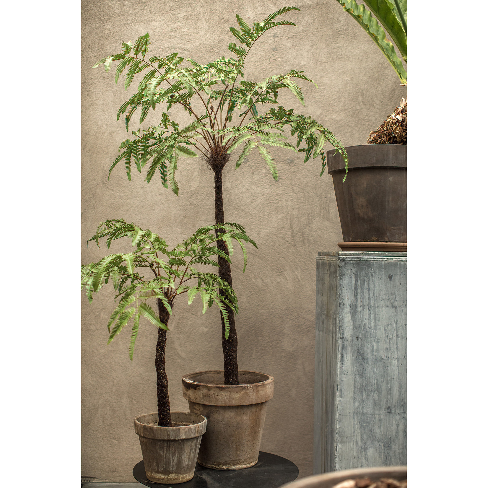 Silk-ka Plant Fern Green | 105 cm