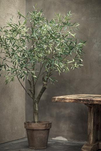 Silk-ka Plantez le vert olive | 198 cm