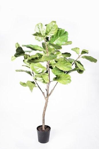 Silk-ka Plant Ficus Green | 152 cm