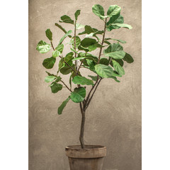 Silk-ka Plant Ficus Groen | 152 cm