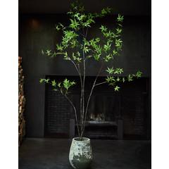 Silk-ka Plant Esdoorn Groen | 244 cm
