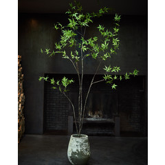 Silk-ka Plant Maple Green | 244 cm