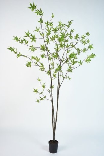 Silk-ka Plant Maple Green | 244 cm