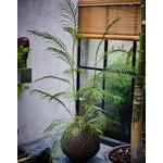 Silk-ka Varen Groen   150 cm