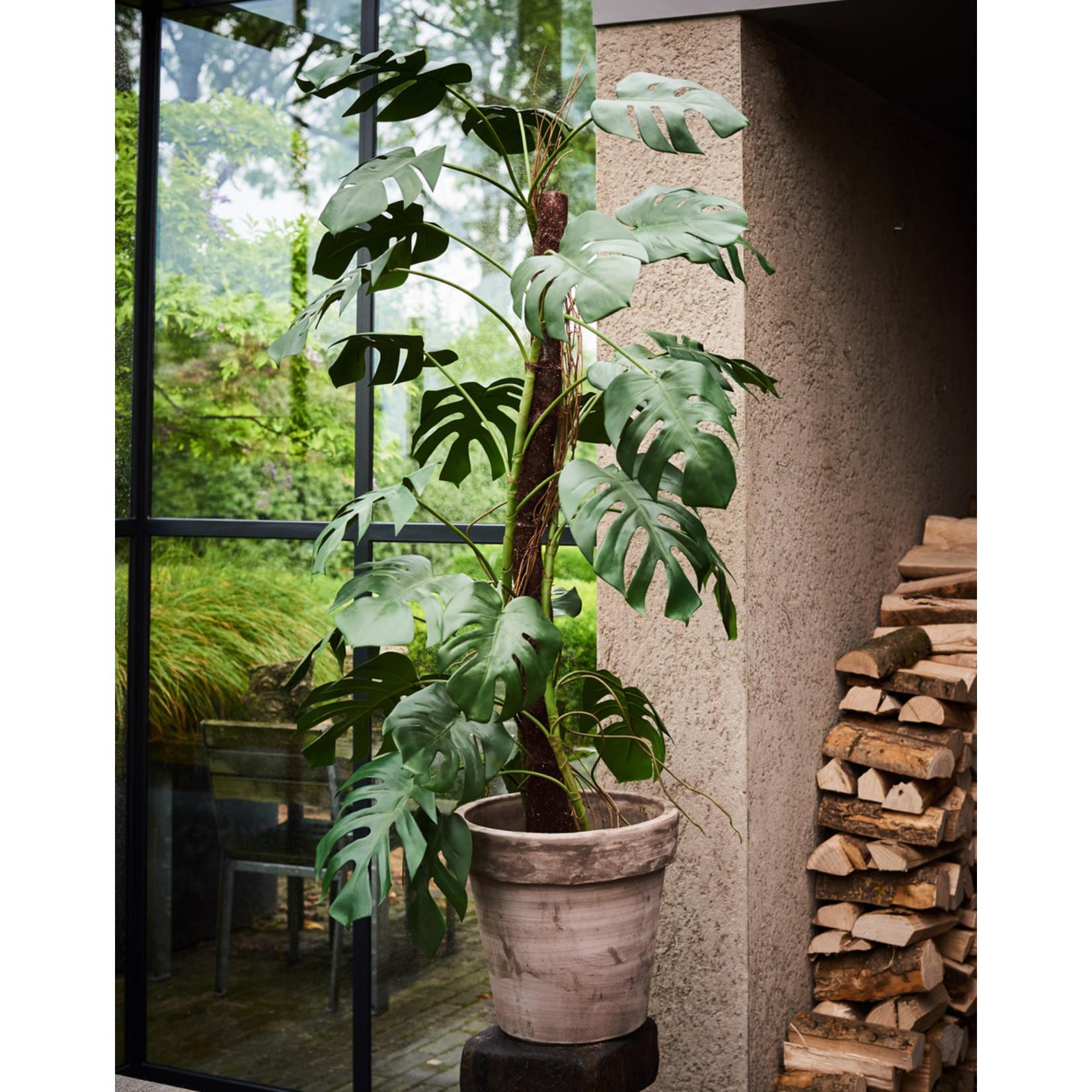 Silk-ka Plant Philodendron Green   183 cm