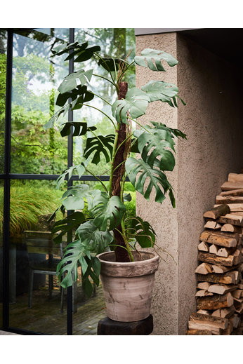 Silk-ka Plant Philodendron Green | 183 cm