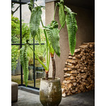Silk-ka Plant Alocasia Green | 178 cm