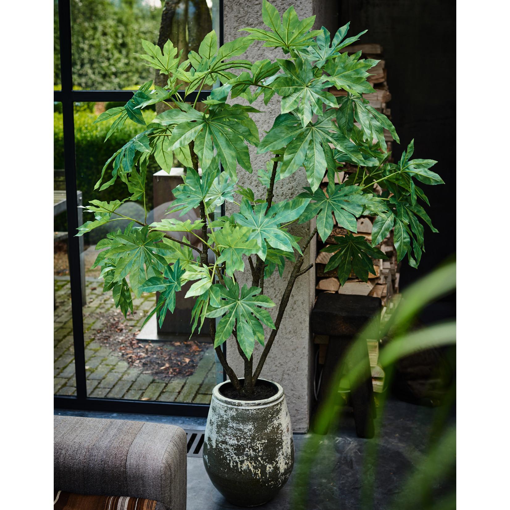 Silk-ka Plant Fatsia Green   150 cm