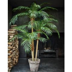 Silk-ka Tree Palm Phoenix Green   183 cm