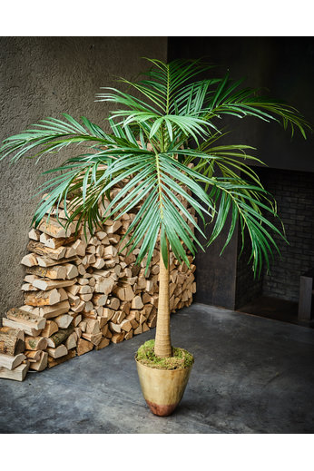 Silk-ka Arbre Palm Green | 137 cm